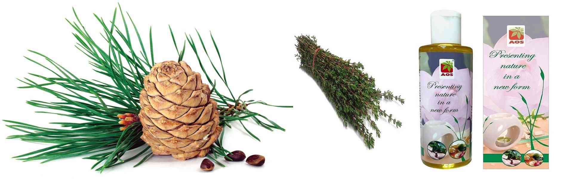 Pine Oils and Derivatives