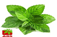 Mint Oil Dementholised